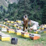 bees 150x150 Karakorum – Part 1