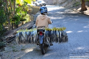 Fish transport in Timor Leste