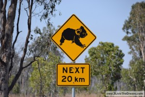 Koalas! But we saw them only on the road signs....