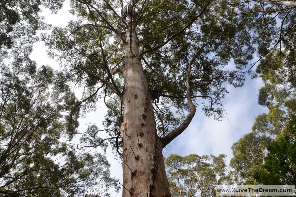 Fire lookout tree