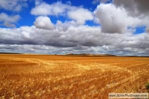 Endless grain fields