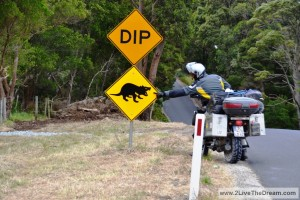 Dangerous wildlife in Tasmania